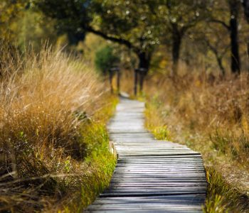 adventure-boardwalk-countryside-289327